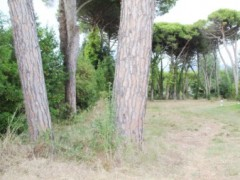 Partaccia, I sold unedifiable land with driveway access - 2